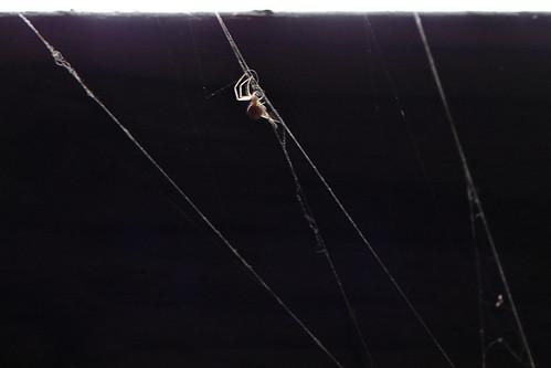spiders spiderweb chuck 2008pics