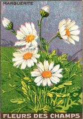 fleurs des champs 4
