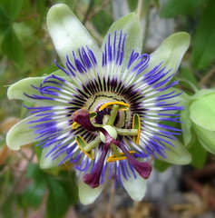 Exotic (magnum_lady) Tags: ireland flower exotic mayo glasshouse naturesfinest awesomeblossoms castlear