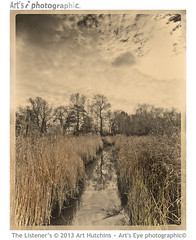The Listener's (Art's Eye photographic) Tags: trees plants water rural reflections reeds landscape flora silence grasses ripples treeline surfaces bucolic wetland reedbed arborial