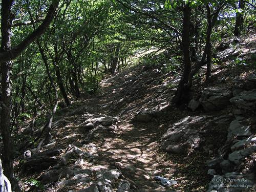 Кореїзька стежка