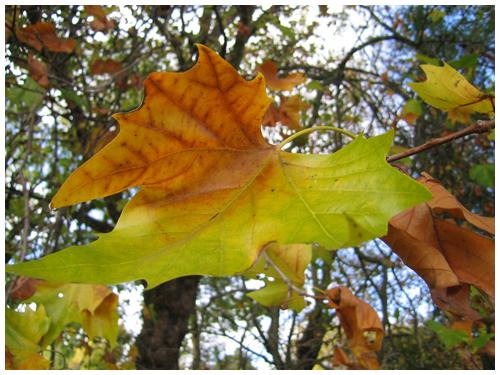 Autumn's Residue