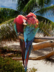 twoHearts2 (GrfxDziner) Tags: fixed fixedgrfxdziner macaw greenwingedmacaw parrot bird tropical pentool magneticlassotool pentoolexample lesson4b lesson4 dc dcmemorialfoundation eschuela lesson2c lesson2cexample viewtutorial food4thought foxtv myfoxboston 4deanna justicefordeanna 20thcenturyfox nature birds