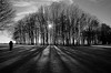 Winter's sun through trees, Northern France (Trilllion) Tags: trees winter blackandwhite bw sun nikon shadows searchthebest romantic blueribbonwinner supershot fineartphotos photographyrocks mywinners platinumphoto anawesomeshot citrit overtheexcellence artlegacy betterthangood bwartaward goldstaraward theenchantedcarousel 100commentgroup 100commentsgroup trilllion