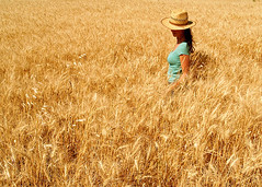 my yellow sea (virginiaz) Tags: selfportrait soe entrerios agri campodetrigo urdinarrain virginiaz betterthangood