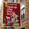 Clean Up After Your Dog by ·BigGolf·