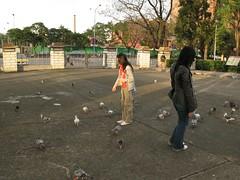 羅莉餵鴿子黃昏版