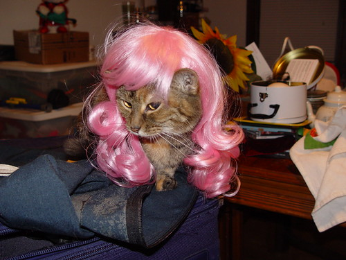 Latte in a Kitty Wig