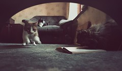 I took the Polaroid (oladios) Tags: cats catalogue mousespointofview anawesomeshot oladios somecatsdoread