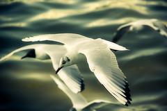 Bird Tour