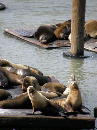 Pier 39 Residents