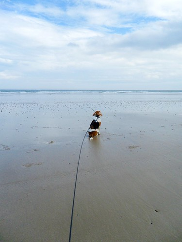 Little dog, big beach