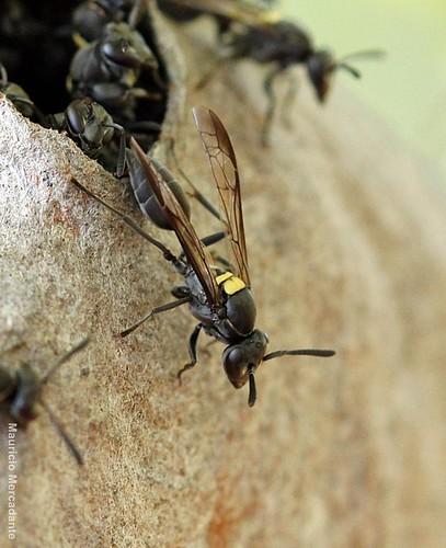 Bộ sưu tập côn trùng 2 - Page 15 5767185700_312ddf0aaa