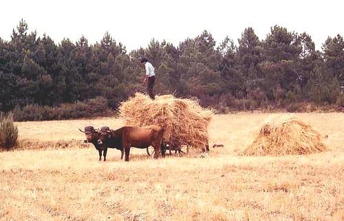 Pendilhe - Vale de Salgueiro - ago/1981.