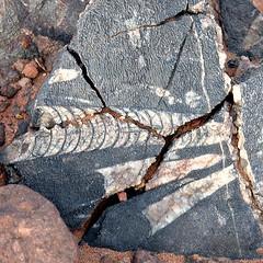 Orthoceras fosiles (Ametxa) Tags: sahara square desert morocco squareformat maroc desierto marruecos aesthetic smörgåsbord 500x500 bsquare