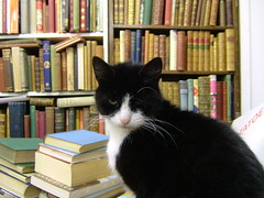 Boris in the Bookshop 5 (eagle stirreth) Tags: cats cat glasgow books boris bookshop voltaire rousseau