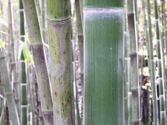 ortobotanico 158 (blum1) Tags: alberi fiori piante ortobotanico