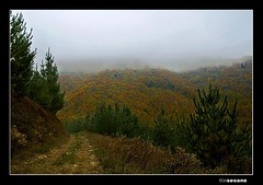 Tapez na Seronda (Chamicu) Tags: autumn canon tin eos asturias bosque 1750 otoo monte pinos tamron niebla anochecer asturies cangas narcea seronda seoane 400d corias chamicu trayasgaya
