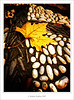 Bye Bye Autumn (*atrium09) Tags: olympus 10faves atrium09 platinumphoto ltytr1 rubenseabra