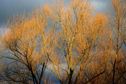 Orange storm tree IV