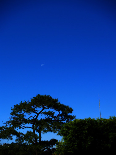 PC012653 copy baguio city benguet philippines travel photography asia moon sunset blue bonsai tree minimalist minimalism