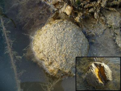 Sponge-P1060116