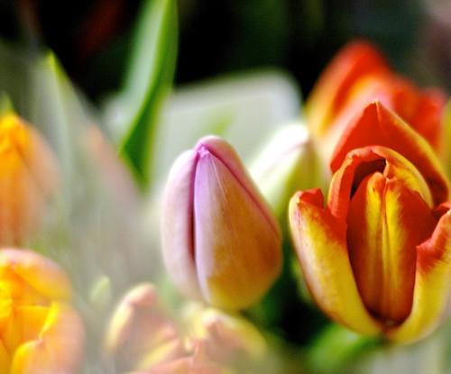 Pankaj sent me tulips!