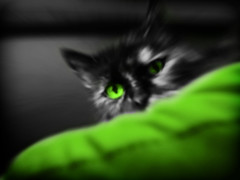 GaTiTa (SwEeTcHy) Tags: pet black verde green eye animal cat photo lima kitty gato felino gijon mascota gatita cojin specialeffects minino thebigone chimos limalimon mywinners almostanything platinumheartaward theperfectphotographer goldstaraward drusbi