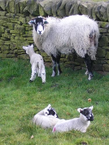 April Lambs
