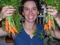 carrot harvest 6/5/08