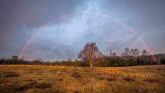 After a rain shower in the morning (wiscmic) Tags: baum bäume clouds germany haltern natur nature rainbow regenbogen sonne sun tree trees westruperheide winter landscape outdoor halternamsee nordrheinwestfalen deutschland landschaft nrw