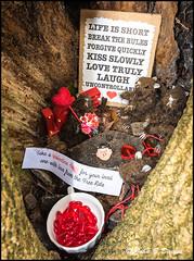 Clyne Gardens - FREE Valentine Hearts from the TREE RATS - (John B Davies) Tags: rats tree valentine hearts clyne treerats