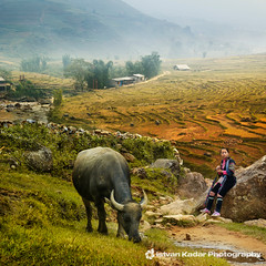Black Hmong Woman with Water Buffalo (fesign) Tags: woman nature field animal landscape village rice vietnam ricefield sapa waterbuffalo riceterraces blackhmong catcatvillage idream terracedfields thelittledoglaughed hoanglienson laocaiprovince hoangliennaturereserve