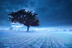 Saluting Icy Days (Martin Gommel) Tags: blue winter colour tree field fog clouds contrast canon germany dark deutschland frost wide foggy feld freezing surreal wolken sigma flog unreal icy karlsruhe weite atnight baum 10mm badenwrttemberg eisig kwerfeldein eos30d martingommel shotbyscott karlsruhbe ionlyusefairtradehistogramms