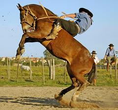 69 (Eduardo Amorim) Tags: brazil fab horses horse southamerica brasil caballo cheval caballos bravo cavalos pelotas pferde cavalli cavallo cavalo gauchos pferd riograndedosul pampa hest hevonen campanha brsil chevaux gaucho  amricadosul hst gacho  amriquedusud  gachos  sudamrica suramrica amricadelsur  sdamerika littlestories jineteada magicdonkey   costadoce americadelsud mywinners abigfave gineteada platinumphoto anawesomeshot superaplus aplusphoto  americameridionale campeiros campeiro thatsclassy eduardoamorim brillianteyejewel picswithsoul top20travelpix