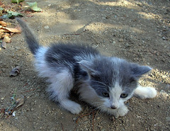 Kedi4 (hasanoglanli) Tags: cat kedi