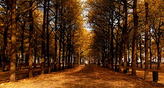 THE HAGUE: LANGE VOORHOUT (Akbar Simonse) Tags: autumn holland fall netherlands bravo thenetherlands denhaag hague soe langevoorhout blueribbonwinner magicdonkey outstandingshots isawyoufirst goldenphotographer proudshopper theperfectphotographer dedoka 200000000stagelovers akbarsimonse