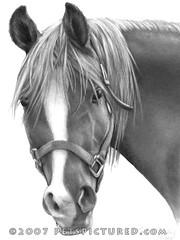 Mama Rosa, Arabian Horse
