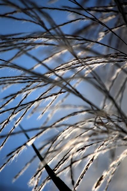 silver streaks....