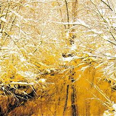 "My Yellow Wild River And You… Happy Together…!!! :))) (Denis Collette...!!!) Tags: morning winter light sun snow canada colour yellow jaune sunrise soleil bravo searchthebest quebec lumière hiver rivière serenity neige couleur matin sauvage heureux sérénité firstquality magicdonkey ""deniscollette"" «wildriver» world100f «santaclaus» «pèrenoël» «leverdesoleil» «theturtles» «happytogether» «happymedium» «justemilieu» explorewinnersoftheworld"