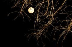 moon behind twig (Salma Daoud) Tags: moon tree night dry twigs