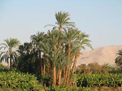 Egypt Xmas 2007 163