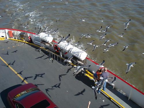 FerryGulls.jpg