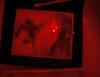 darkroom (saikiishiki) Tags: blue portrait dog white black film darkroom dark photography grey looking metaphoto room butt gray bum weimaraner developer tray tongs chemicals pictureofapicture weim greyghost fixer squidoo weimie rolyn weimaranerpaintingcom weimaranerart waimarana weimaranerartist weimaranerphotography weimaranerphotographer saikiishiki