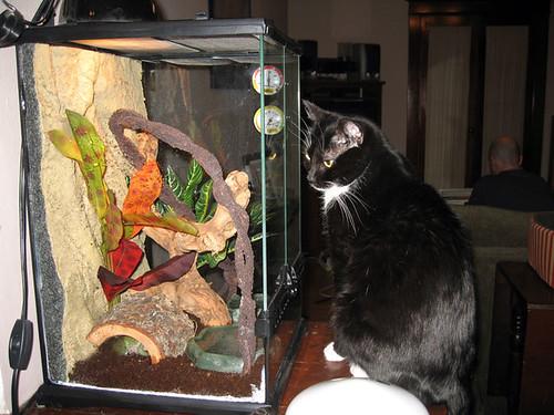Lola & Tank