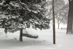 Snow Road [2]