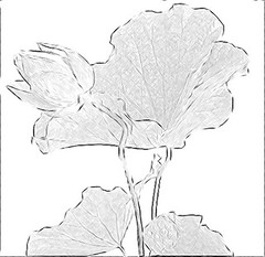 Lotus Flower Sketch - IMGP0718 (Bahman Farzad) Tags: china pink flowers plants india white inspiration plant flower eye art water tattoo pencil thailand design sketch photo leaf petals flora truth cambodia soft peace lily lotus blossom designer drawing fineart fine paintings calming award drawings peaceful line teacher international national charcoal lilly sacred therapy budha elegant inspirational spiritual sketches simple hindu author saigon soulful heavenly farzad buda tatto winning peacefulness based devine indias lotusflower therapist bahman lotusflowers nationalflowerofindia bahmanfarzad indiasnationalflower soulfulflower
