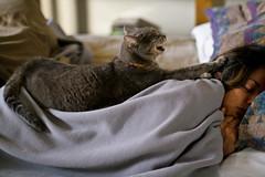 [フリー画像] [動物写真] [哺乳類] [ネコ科] [猫/ネコ] [寝顔/寝相/寝姿]      [フリー素材]