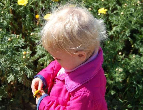 Flower Inspector #9