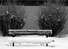 Snowy Bench (Sherlock77 (James)) Tags: snow building calgary bench bush stanleypark